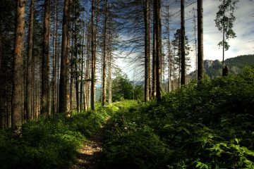 Rowerem spod Tarnowa pod same Tatry