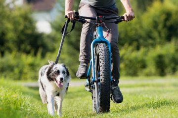 Jak zorganizować wycieczkę rowerową z psem?